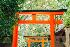 Torii gate and forest at Kawai shrine in Kyoto, Japan. Torii gate and forest at Kawai shrine, Kyoto, Japan stock photos