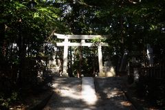 Torii gate and guardian dogs of Shinto shrine stock images