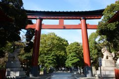 Torii gate and guardian dogs of Shinto shrine. In Japan royalty free stock image
