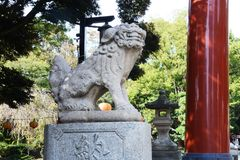 Torii gate and guardian dogs of Shinto shrine stock image