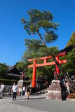 Torii gate and pine tree in Kyoto temple Royalty Free Stock Photo