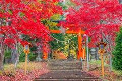 Torii gate to chureito pagoda in autumn Stock Image