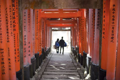 Torii Gate Tunnel Royalty Free Stock Image