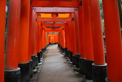 Torii gates Royalty Free Stock Photos