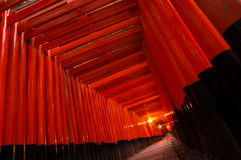 Torii Gates. At Fushimi Inari shrine Stock Image