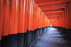 Torii gates in Fushimi Inari Shrine, Kyoto, Japan Royalty Free Stock Photo