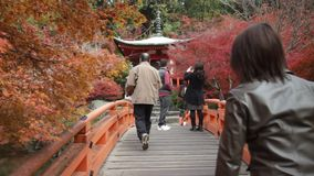 Torii gates in Fushimi Inari Shrine, Kyoto, Japan stock video