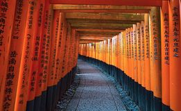 Torii gates in Fushimi Inari Shrine, Kyoto, Japan.  Royalty Free Stock Photo