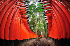 Torii gates of Fushimi Inari Taisha Shrine Royalty Free Stock Photography