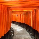 Torii gates of Japan Royalty Free Stock Photo