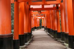 Torii gates. KYOTO, JAPAN - NOVEMBER 28, 2016: Torii gates of Fushimi Inari Taisha shrine in Kyoto, Japan. There are more than 10,000 torii gates at Fushimi Stock Photo