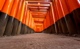 Torii gates Stock Photo