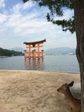 Torii giapponese fotografia stock libera da diritti