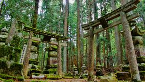 Torii on the graveyard Oku-no-in, Koya-san, Japan Royalty Free Stock Photo