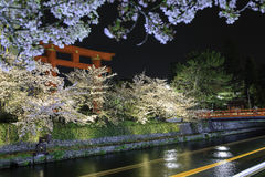 Torii Heian Jingu with cherry blossom at night, Ky Royalty Free Stock Image