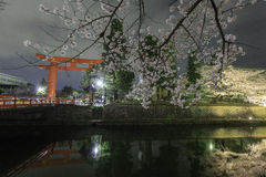 Torii Heian Jingu with cherry blossom at night, Ky Stock Image