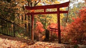 Torii in het de herfstbos stock videobeelden