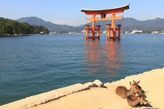Torii at high tide Stock Photography