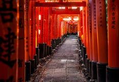 Torii på Fushimi Inari-taisha på höstsolnedgången med solljus som filtrerar till och med portarna och någon bladkull på sidorna royaltyfri foto