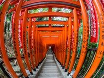 Torii på hastar den Jinja relikskrin, Tokyo, Japan fotografering för bildbyråer