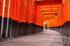 Torii path lined with thousands of torii in the Fushimi Inari Taisha Shrine in Kyoto. Kyoto, Japan - November 10, 2016 : Torii path lined with thousands of torii Stock Images
