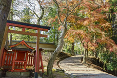 Torii and red maple tree in the famous and historical TodaiJi of Stock Photos