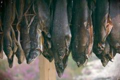Torka asken för att torka fisken arkivfoton