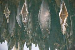 Torka asken för att torka fisken arkivbilder