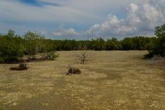 Torka av mangroveskogen Arkivfoton