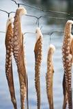 torka bläckfisken som ställs in till arkivfoto