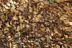 Torka bladet som traver upp Arkivfoto