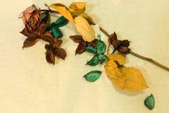 Torka blommabakgrund Royaltyfri Bild