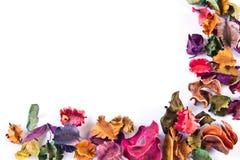 torka blomman arkivfoton