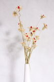 torka blomman Fotografering för Bildbyråer