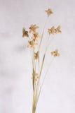 torka blomman Arkivfoto