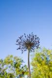 Torka blomman mot den blåa himlen och göra grön träd Arkivbild