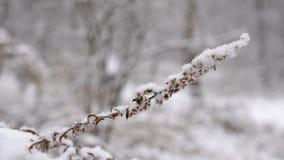 Torka blomman som svänger i ultrarapid i insnöad skog eller, sära stock video