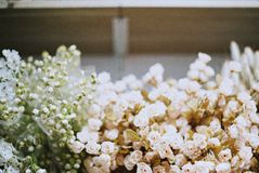 Torka blommatappning Arkivfoto