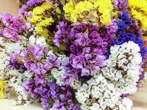 torka blommor Arkivbilder