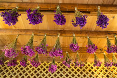 Torka blommor Royaltyfri Bild