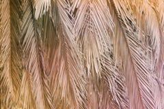 Torka bruna palmblad som hänger ner från trädet arkivbild