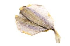 torka den isolerade fisken Royaltyfria Foton