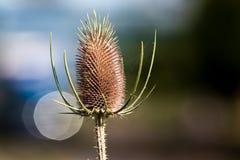 Torka den taggiga växten i sommarvärmen royaltyfria foton