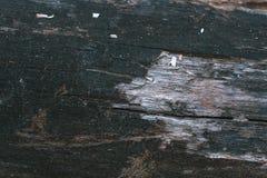 Torka det naturliga skället av wood bakgrund Arkivbilder