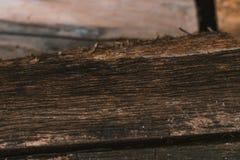 Torka det naturliga skället av wood bakgrund Royaltyfri Bild