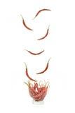 Torka droppe för röd peppar i gräsisolat på vit bakgrund Royaltyfri Foto
