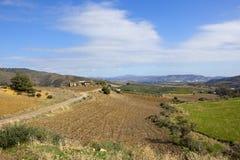 Torka fält och olivgröna dungar av Andalusia royaltyfria foton