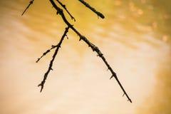 Torka filialen av ett träd på en gul bakgrund Royaltyfria Foton