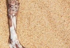 Torka filialen på sanden Arkivbild