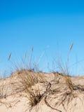 Torka filialer av gräs Arkivfoto